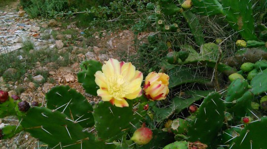 Fotos fra SD kort 141115 1656