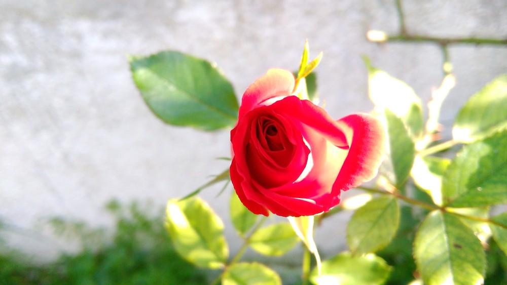 Beauty & Life (5/5)