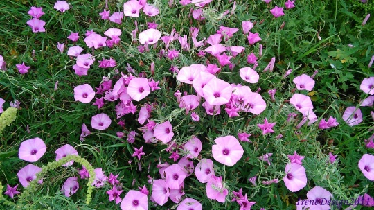 Pink flowers 2
