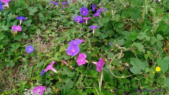 Pink Purple flowers 1