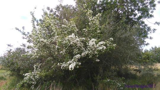 Tree white flowers 1