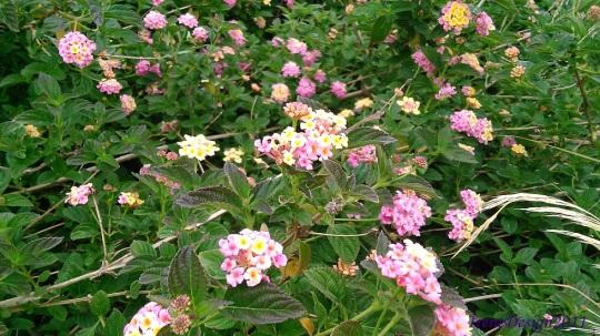 Flower bush 3