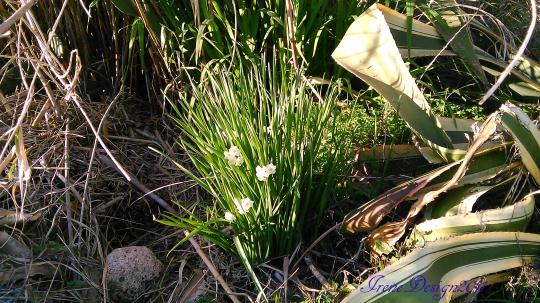 blooming-spring